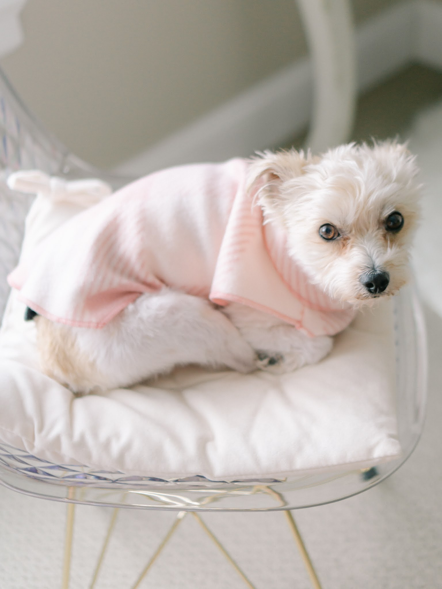 Fleece dog shirts found from an Etsy Shop