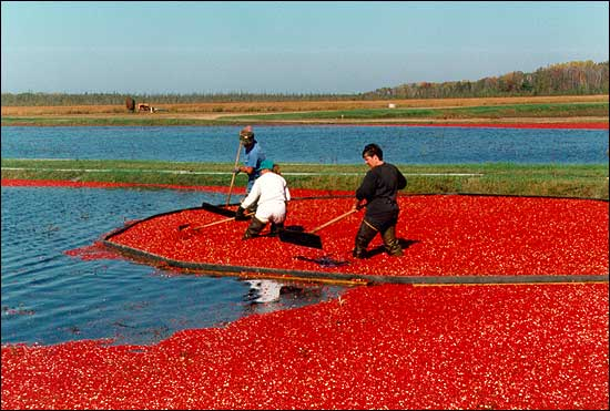 Cranberry Farms In Wisconsin