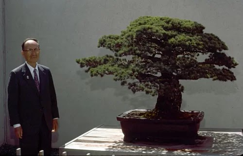 Nearly 400-year-old bonsai trees survived the Hiroshima atomic bomb