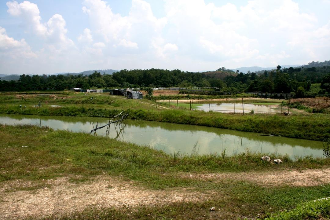 Redfin Enterprise: Our Tilapia Farm