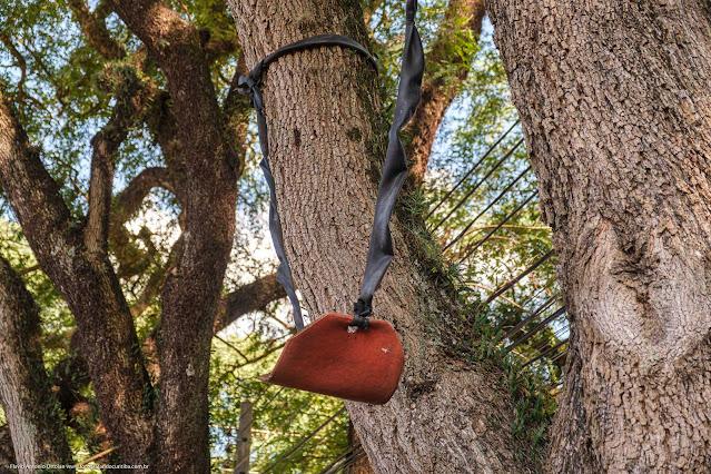 Um balanço em uma árvore