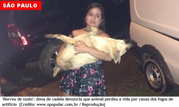 Cadela 'morreu de susto' por causa dos fogos de artifício