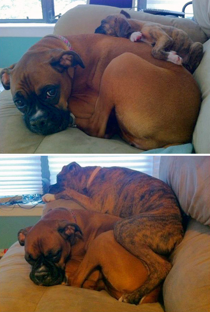 #9 Then And Three Months Later- 15 Before & After Pics Of Animals Growing Up Together
