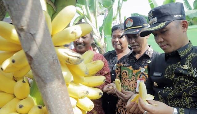 Ir. Paiman Kembali Menjabat di Dinas Pertanian