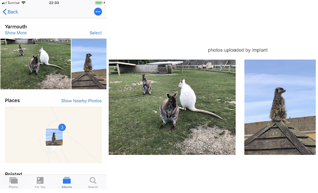 This image shows a screenshot of the iPhone photos app on the left. The user has taken some photos of wallabies in a field and also a meercat sitting on a roof. On the right we can see that those photos have been uploaded by the implant.