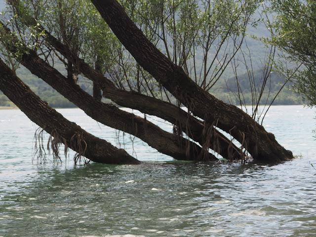 Alberi sul lago di Barrea