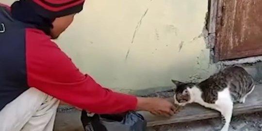 Pria Ini Beri Makan dan Rawat Kucing Jalanan Tiap Hari, Alasannya Bikin Haru