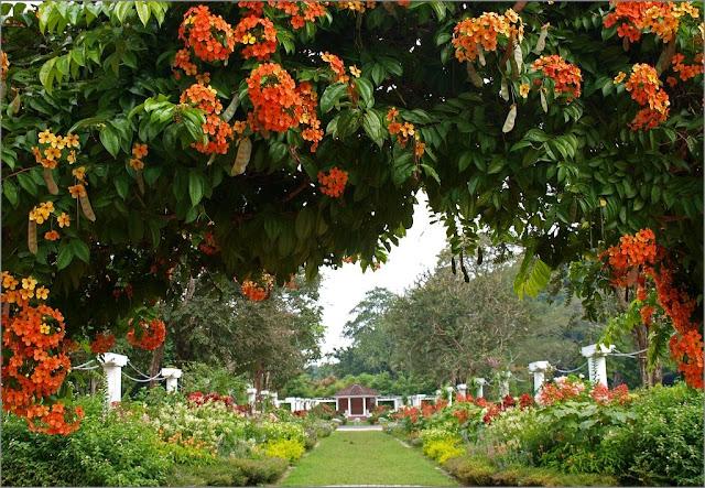 حديقة بينانج النباتية