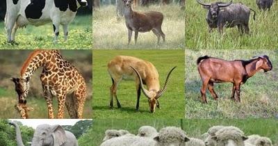 4700 Koleksi Gambar Jaringan Hewan Mamalia Dan Fungsinya HD Terbaik
