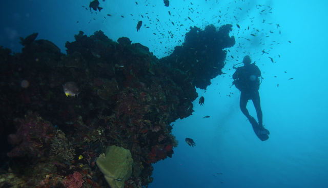 xplore diving, reizen, duiken