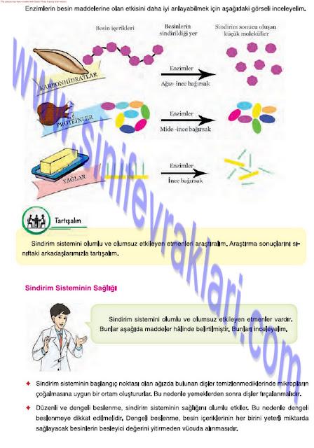 7. Sınıf Fen Bilimleri Mevsim Yayınları Ders Kitabı Cevapları Sayfa 20