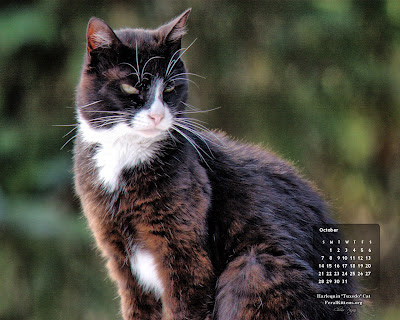 Desktop Wallpaper for October, Harlequin Cat. Click to enlarge, right-click to save as wallpaper