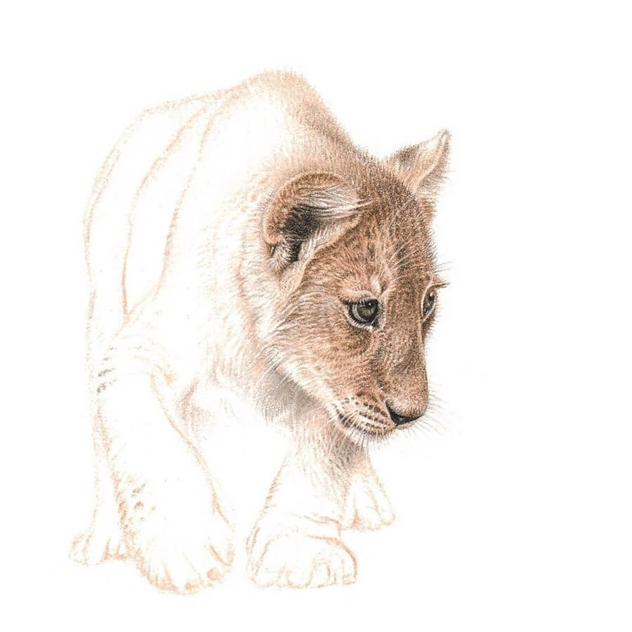 05-Lion-cub-Martin-Aveling-Animal-Portraits-www-designstack-co