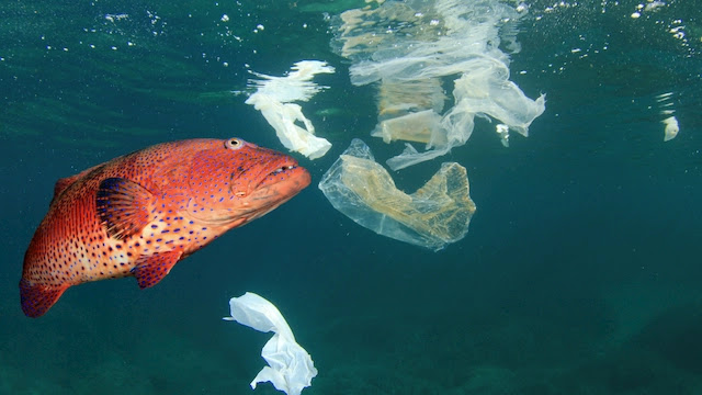 Microplastics in The Ocean Affect Humans