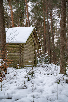 Blättersbergweg Rhodt  Winterwandern Südliche Weinstraße  Rietburg - Villa Ludwigshöhe - Edenkoben 18