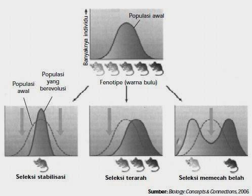 Tiga kemungkinan seleksi alam terhadap populasi tikus