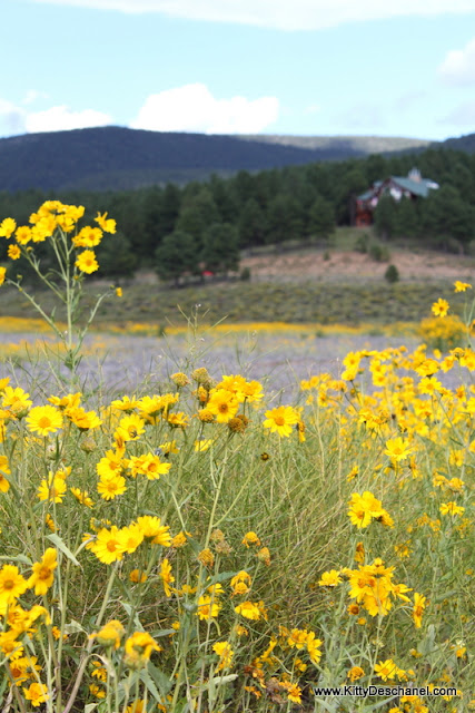 wildflowers and wine in the sangre de cristo mountains