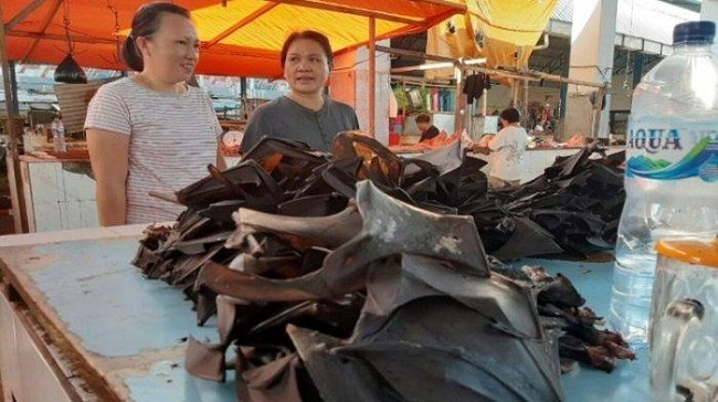 Para ahli mengungkapkan kelelawar Indonesia juga mengandung virus Corona