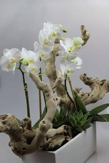 gambar bunga anggrek