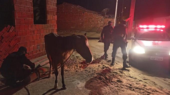 PM atende ocorrência de maus-tratos aos animais em Grossos