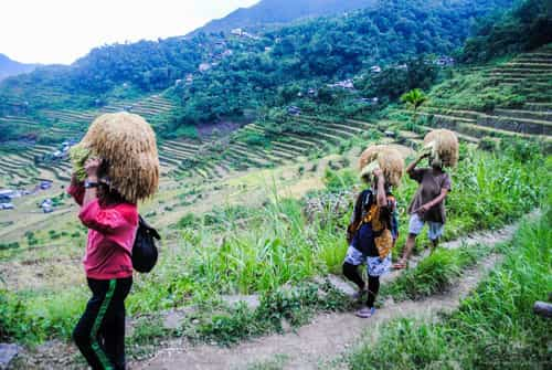 Farmers Carrying Grains