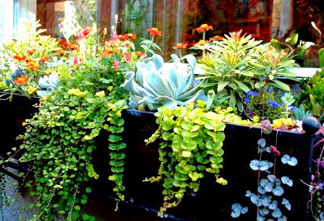 Container Garden: Window Box Gardening
