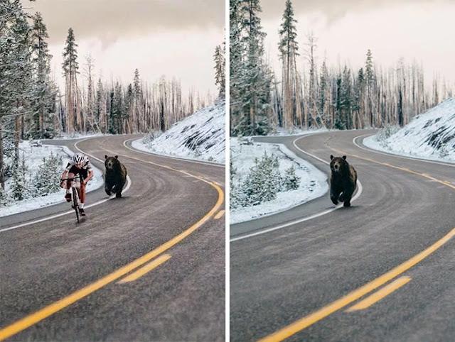 foto editan beruang