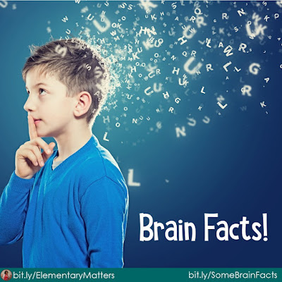 Brain Facts: here are several interesting facts about the brain, including some ideas on how to keep the brain healthy.