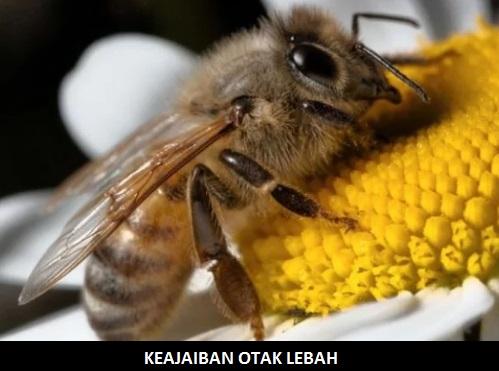 otak-lebah-mirip-manusia