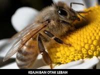 Otak Lebah 99% Mirip Otak Manusia, Berikut Penjelasannya