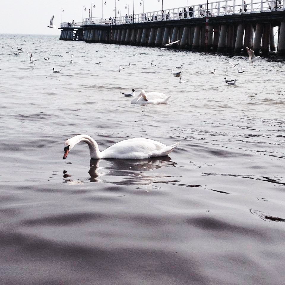 morze wiosna
