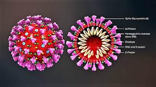 How dangerous is the corona-virus?