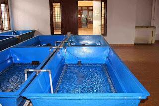 Mempersiapkan Bak Budidaya Ikan Sebelum Digunakan