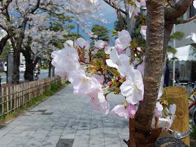 光明寺の桐ヶ谷