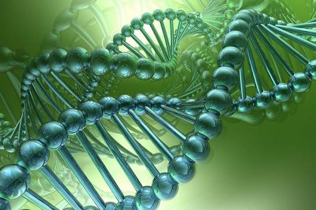 Вчені відкрили, що після смерті організму його гени оживають