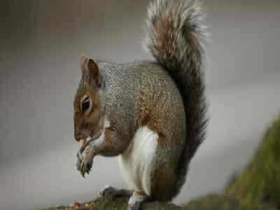 Pet Animals Name Squirrel