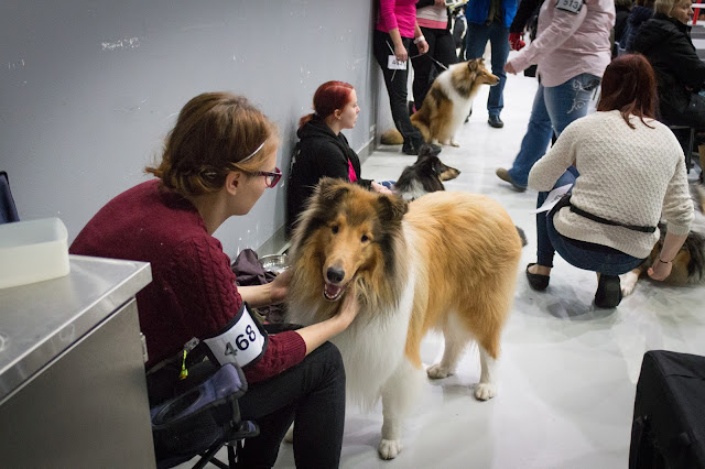 koiranäyttelyt