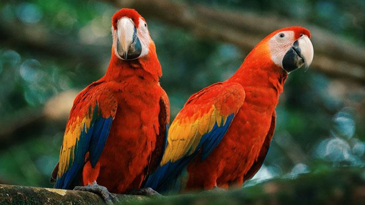 parrots-diet