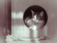 Katzenportrait Tier Katze natrliches Licht von Fotograf Michael Schalansky