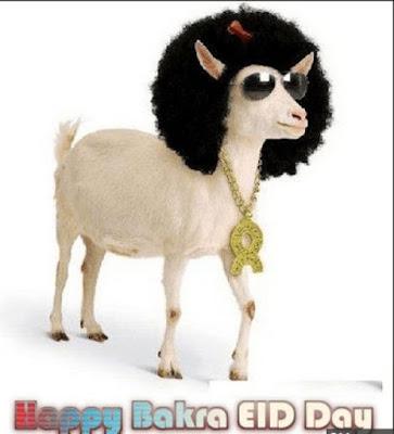Happy Bakre Eid Mubarak