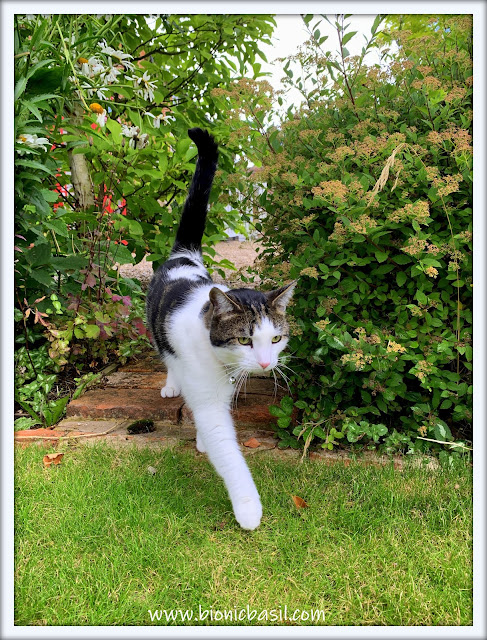 Garden Patrol  with Melvyn ©BionicBasil® The Pet Parade 363