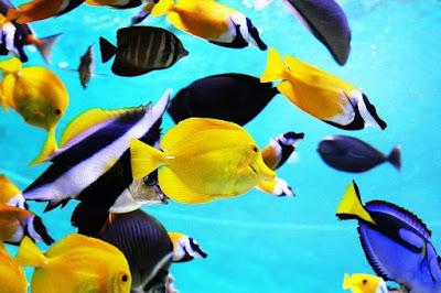 Best Aquarium Backgrounds