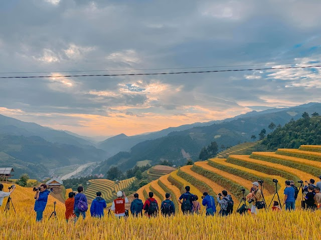Mong Ngua Hill, a ripe rice shooting spot, attracts photographers in Mu Cang Chai