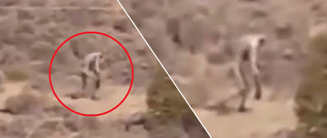 Strange Ape-Like Creature Caught Walking In The Desert. Could This Be Bigfoot?