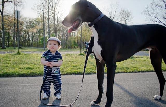 Hướng dẫn bé giữ an toàn với chó