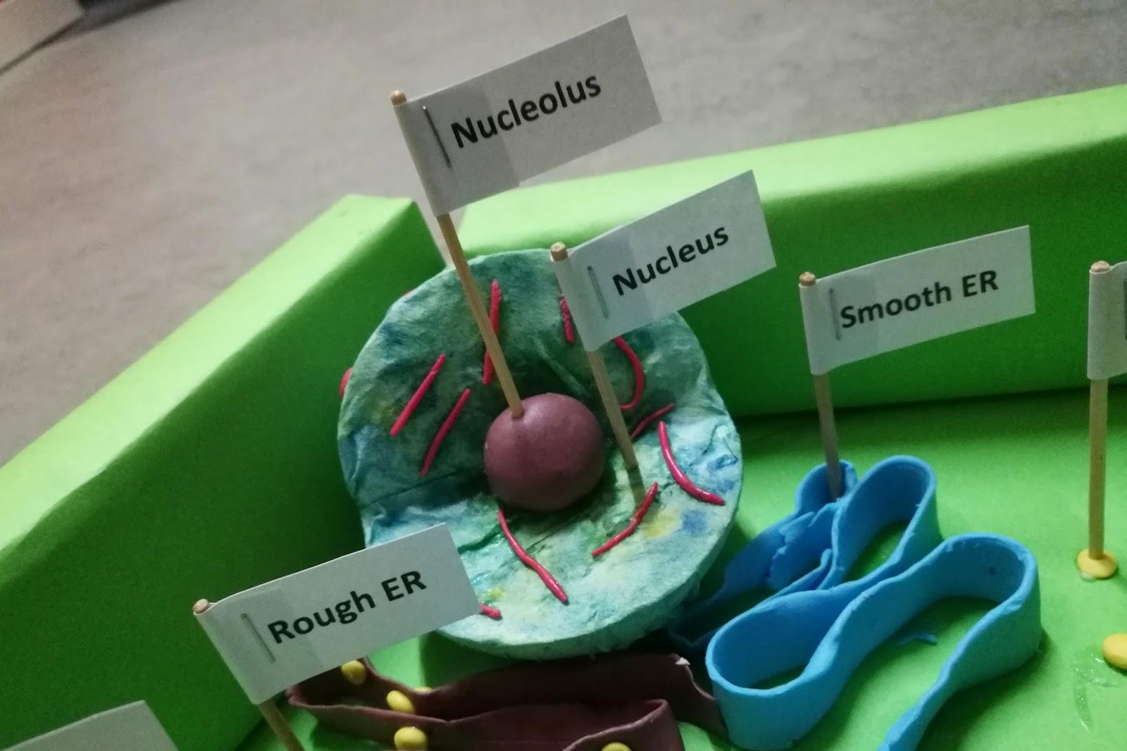 DIY: Plant Cell Model Project - AMERZING