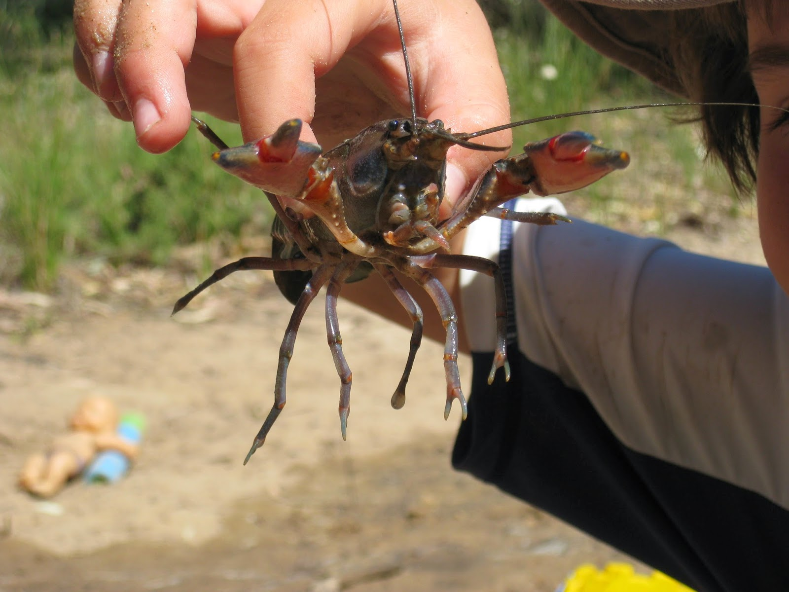 catching a yabby when camping