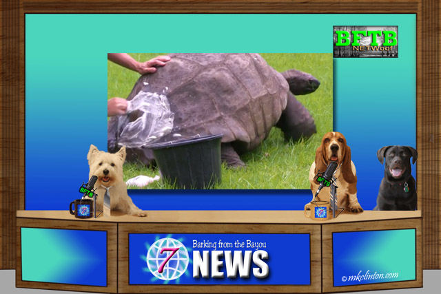 BFTB NETWoof News Set with giant tortoise in background photo