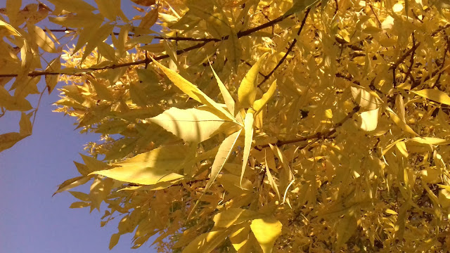fall jesień autumn