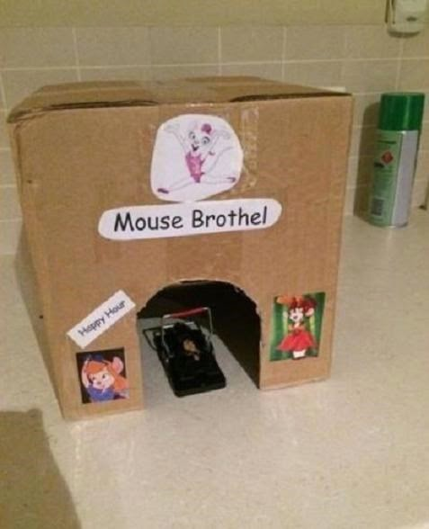build a better mousetrap